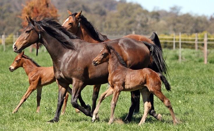Livestock Management (Equine)